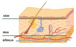 A bőr felépítése